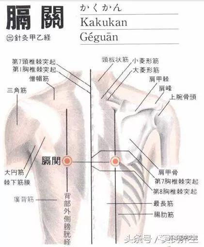 人体常见50个穴位位置,作用,按摩手法,图文取穴,纯干货
