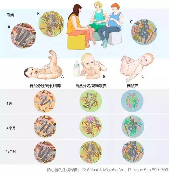 【杨青平】双歧杆菌是最好的细菌?