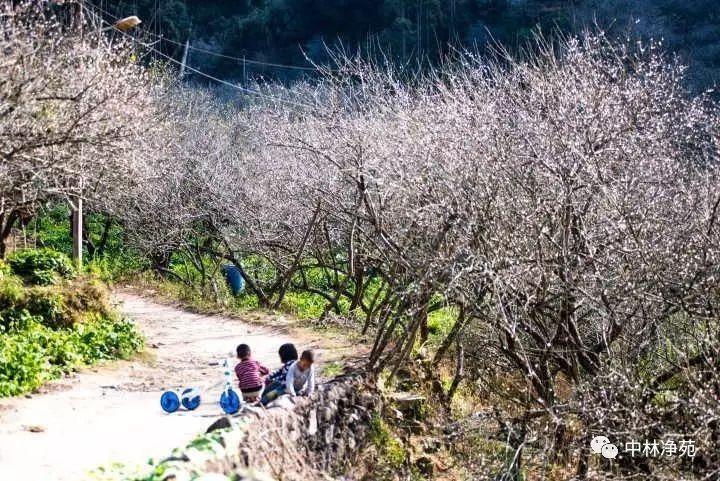 普宁梅园有哪些好玩的_【重磅】中林净苑千亩古梅园荣获普宁市十佳自然景观网络评选第一名!