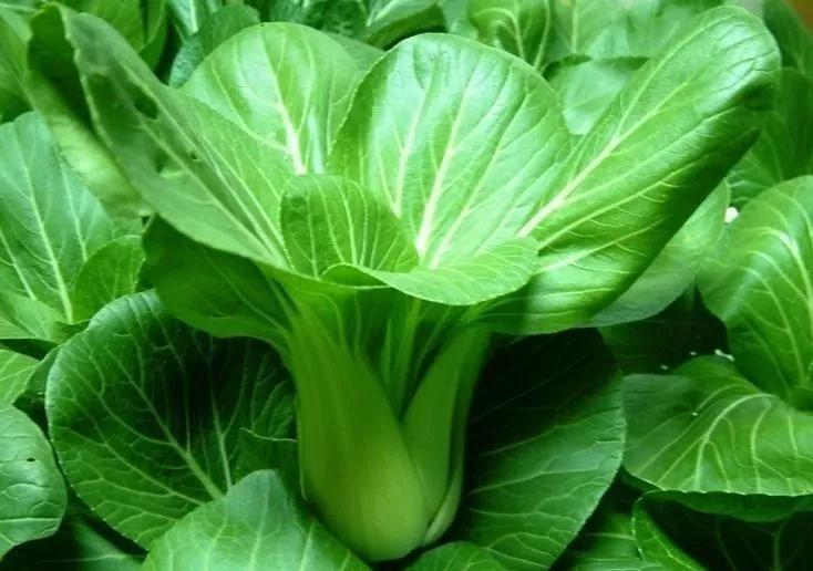 有机肥|施肥管理第一季|之油菜篇(文字篇)