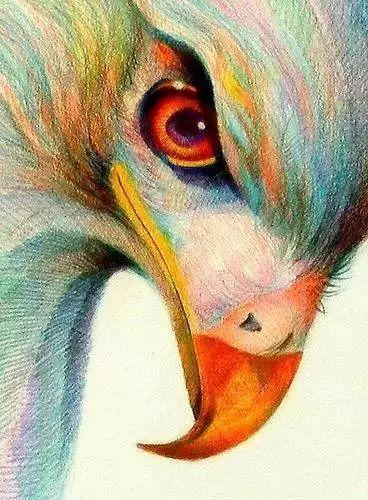 精彩的彩铅动物手绘