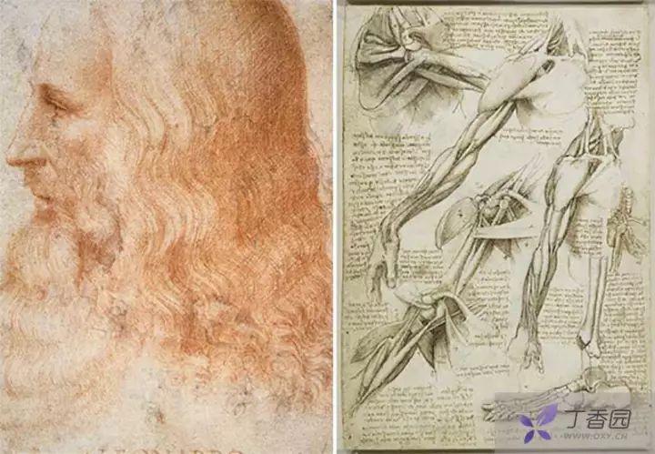 达芬奇(左)解剖手稿(右)