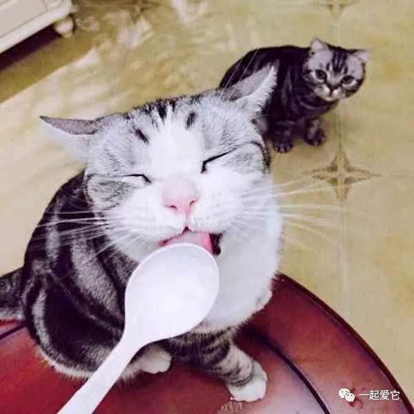 爱就操小骚逼_宠趣| 可能你还不知道你家猫有多爱你,为你操碎了心的