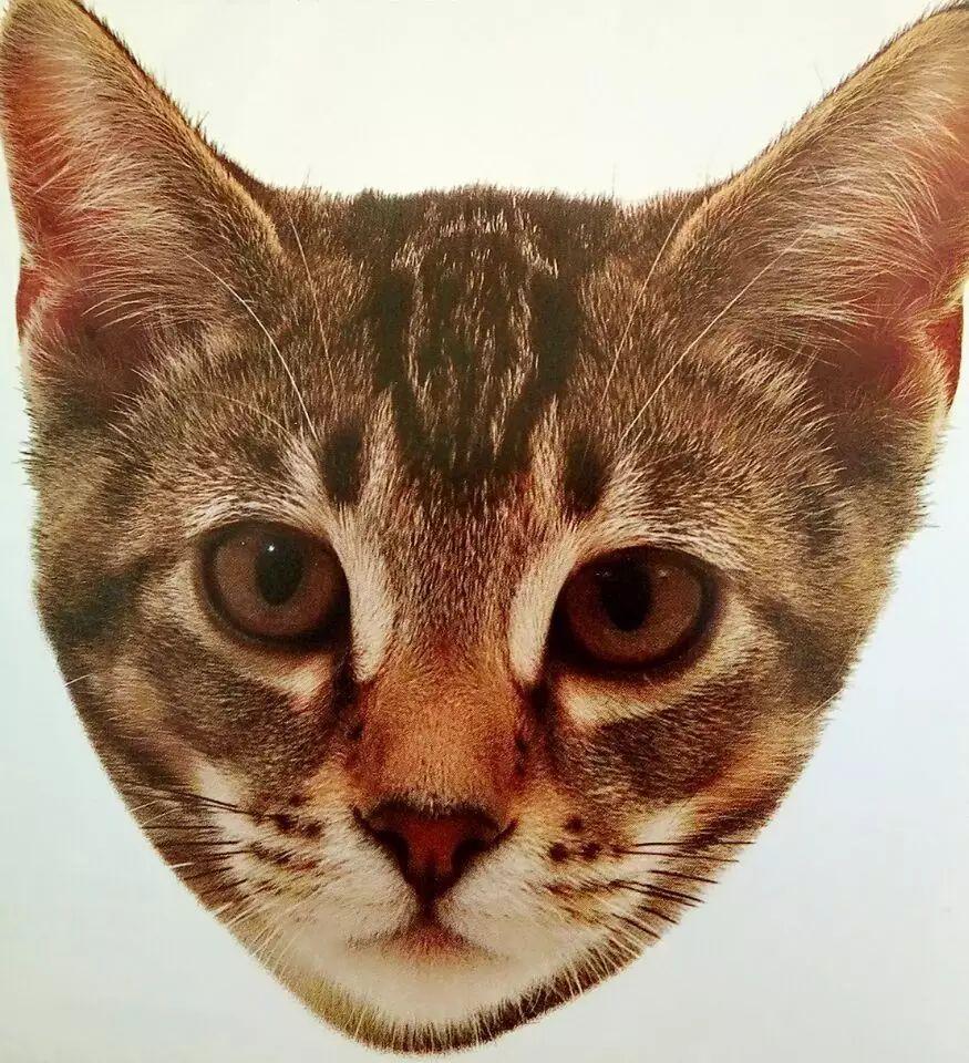 猫的哪些表情代表它爱你