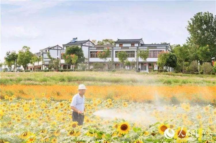 武汉市先后出台了鼓励市民下乡&quot金20条&quot市民下乡助脱贫攻坚&quot钻石10
