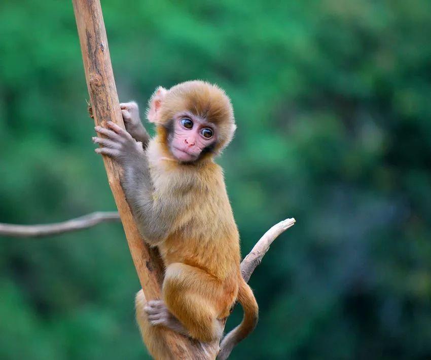 猴子是什么原因_戏猴经历丨听说游客们都被这里的猴子圈粉了,你还不快