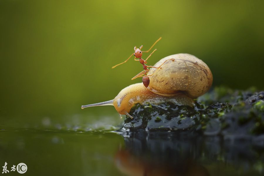 """蜗牛趴车费身上""""搭便车""""过河,蚂蚁:搭车给仓鼠了?网友最多能产几胎图片"""