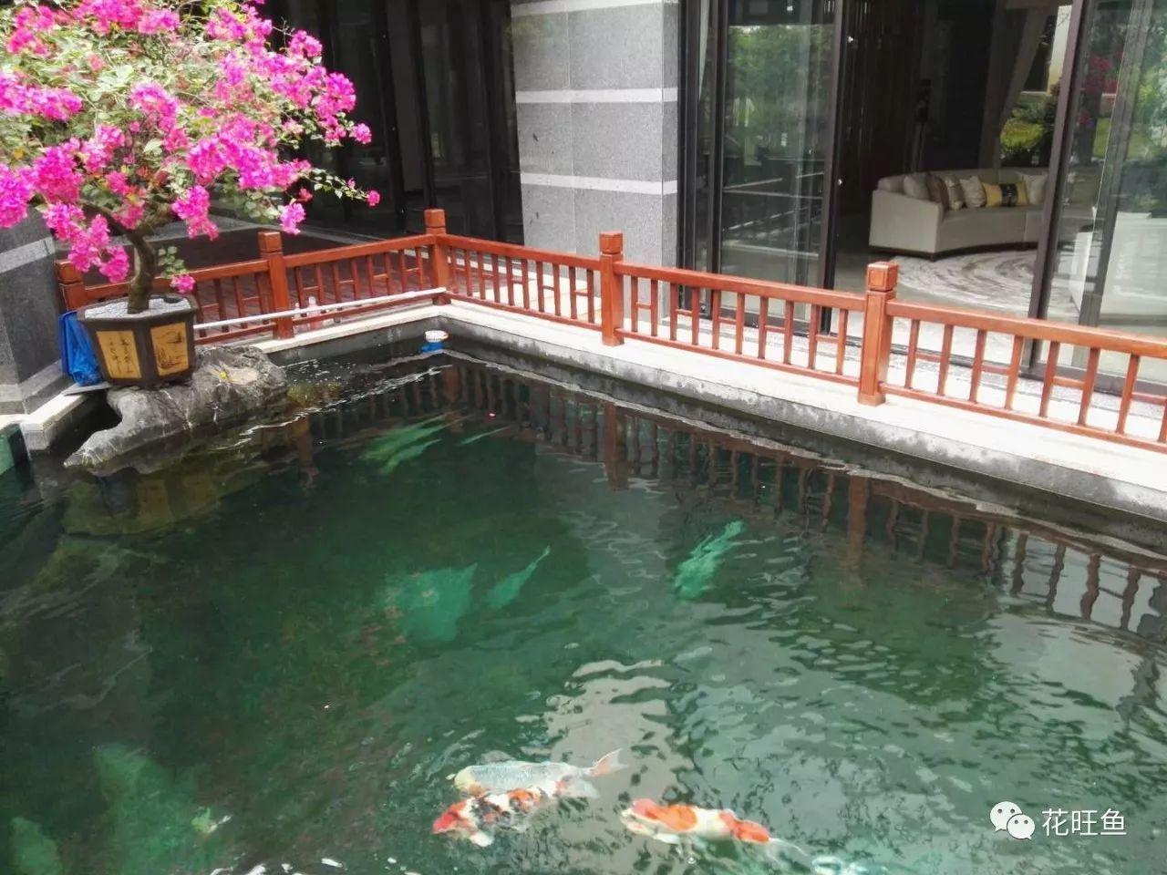鱼菜共生之私家庭院假山鱼池设计效果图_手机搜狐网