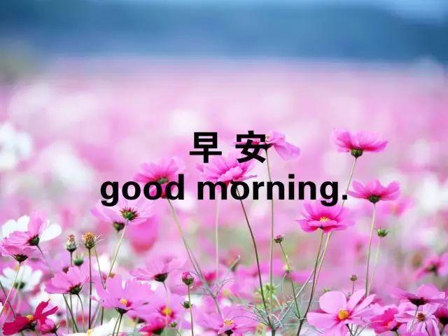 漂亮早安问候图片带字 朋友圈早安心语一句话唯美语录图片