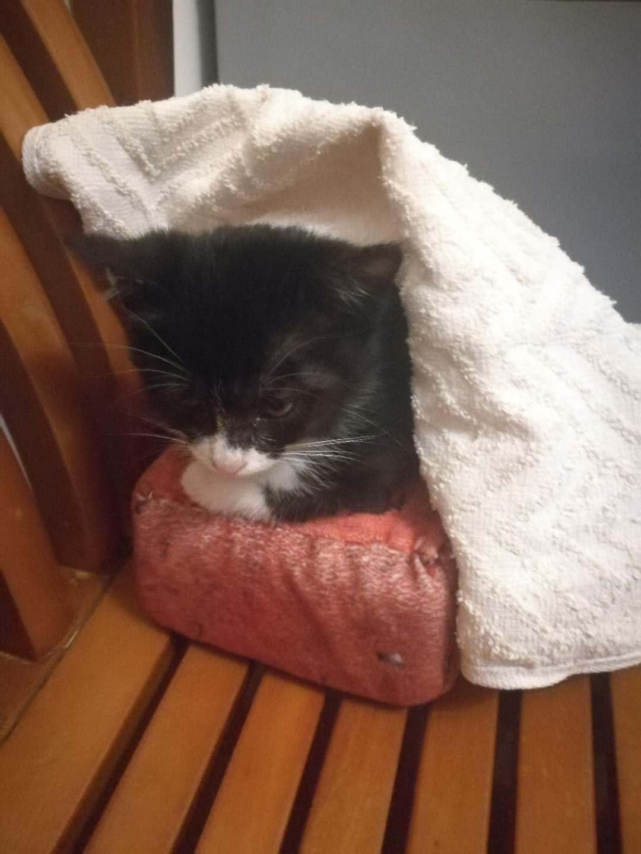 人与动物交配撸撸网_让我撸猫 撒娇的喵星人 不撸不行