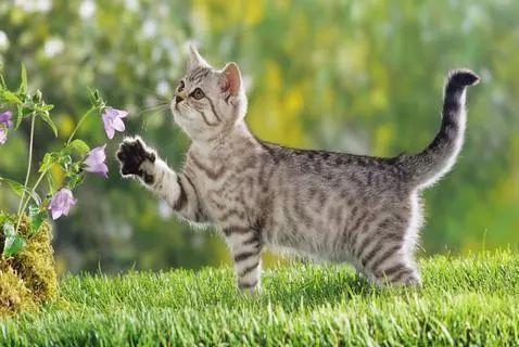 猫白血病初期症状图片
