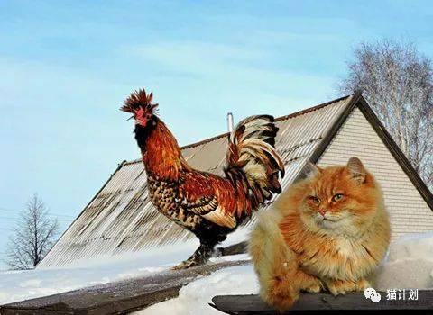 养了一群猫来防老鼠,这么霸气,人看了都胆儿颤!