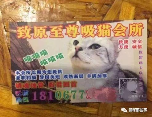 不少吸猫人士分分表示自己住酒店的时候经常收到这种猫色小卡片,让人