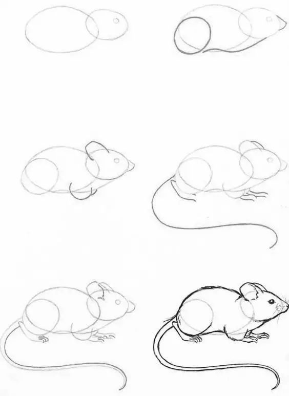 几种动物的线稿画,收藏画起来吧