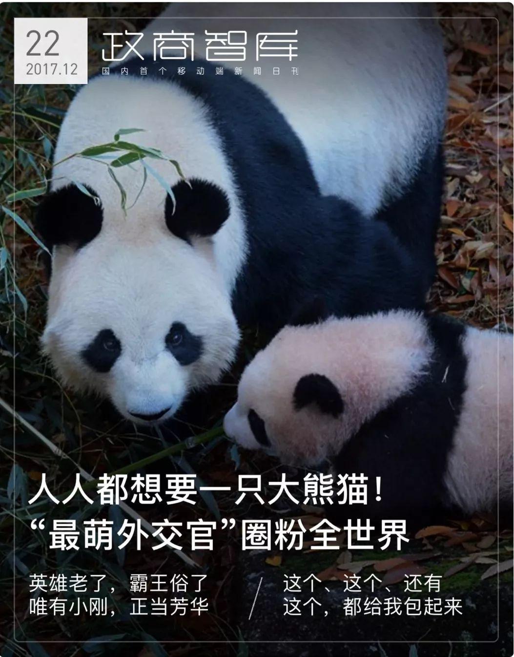 """人人都想要一只大熊猫!""""最萌外交官""""圈粉全世界"""