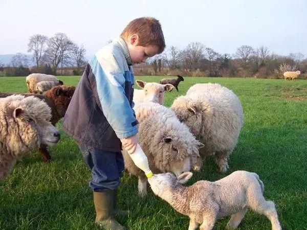 农夫色人和狗_寻一处乡村,做个农夫,种菜养花,采菊东篱下