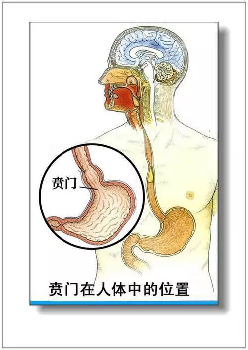 身体内脏分布图_人体器官分部彩图 | 收藏起来,了解一些身体构造