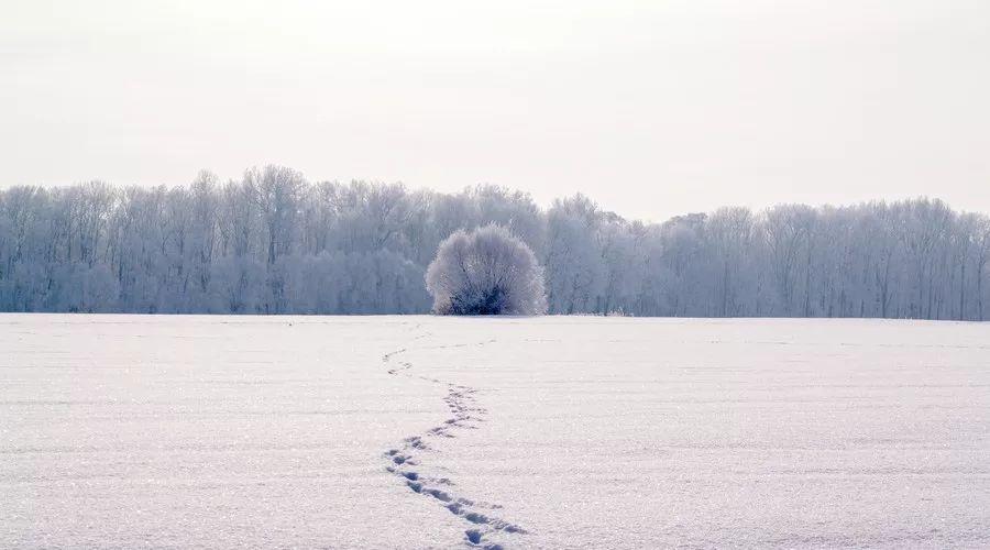 """""""冬天""""的好词好句好段作文素材整理,太全了!"""