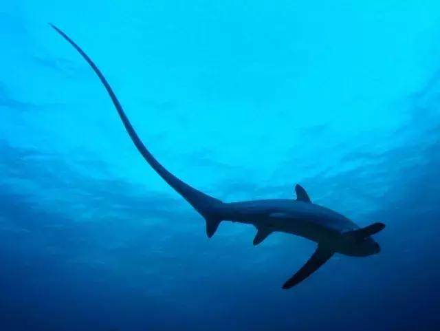 潜客福利 在千岛之国探寻优质潜水点,火山之下与鲸鲨同游
