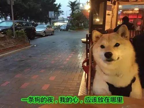 今天是平安夜 小编已经看到了一波狗粮正在袭来的路上 对于单身的男孩