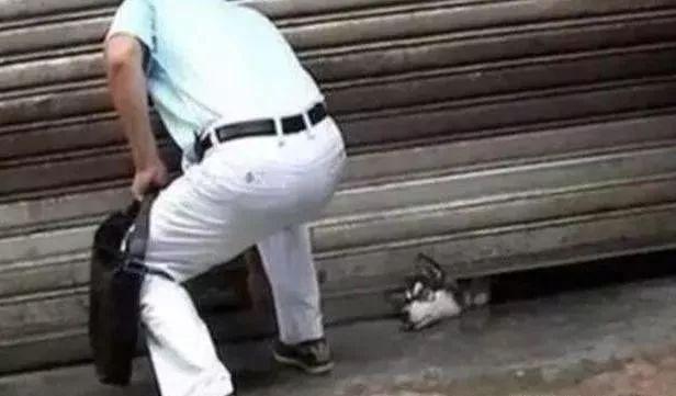 哈士奇的头被卡在卷闸门下主人一看急忙赶去救它结果气笑主人!