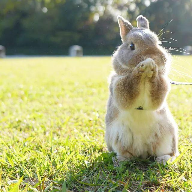 这也说母狗明了小主人很调教兔,一步一步地教它自己上厕所,把人养兔成姐姐图片