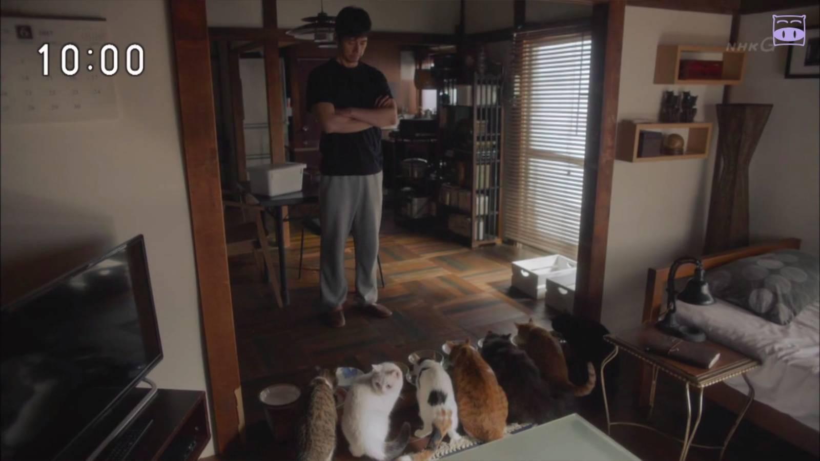一部《妖猫传》,炸出了一大波猫奴和狗控