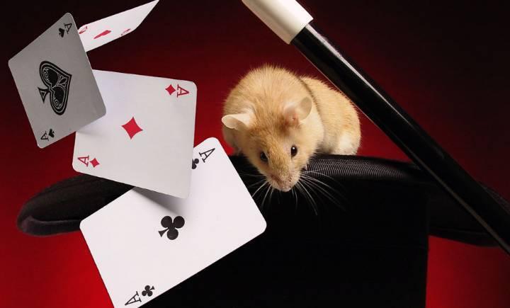 最简单的魔术_6个经典魔术大揭秘,原来我们被骗了这么多年