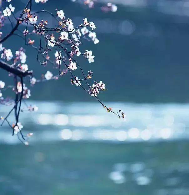 聆听|| 春花秋月一场梦