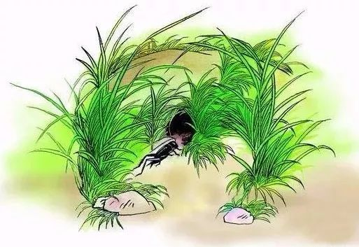 【94爱朗读】「惠娜」,跟法布尔学习如何观察昆虫,《蟋蟀的住宅》