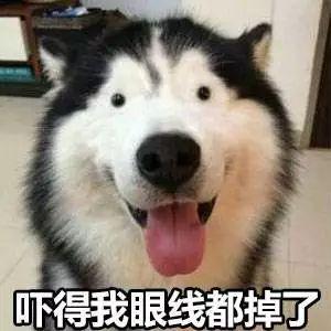 也是狗了! 大家来评评理, 谁家的狗年限量款最让