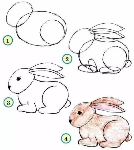 兔子四步画法-简笔画入门大全,这样的画法真好玩