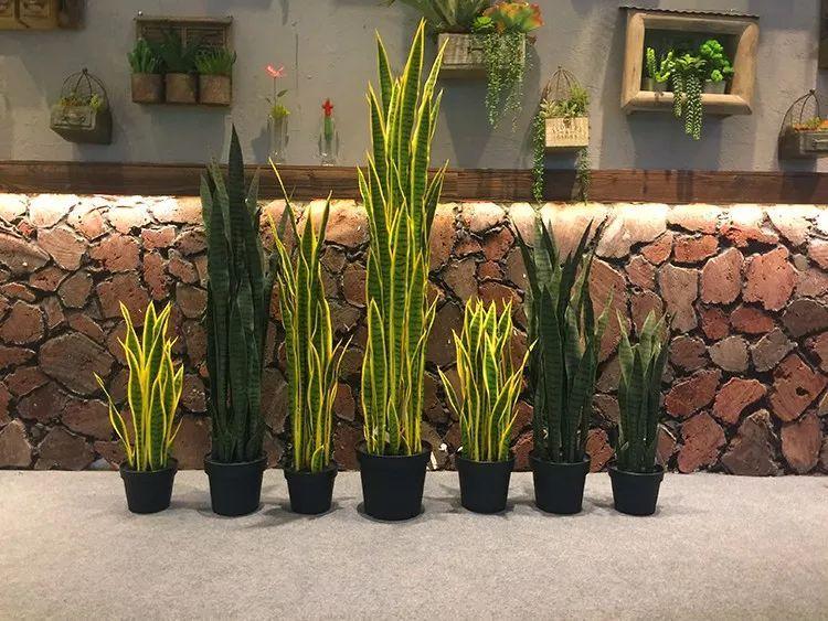 可以净化室内空气的三种盆栽绿植能够吸收有害毒素的植物