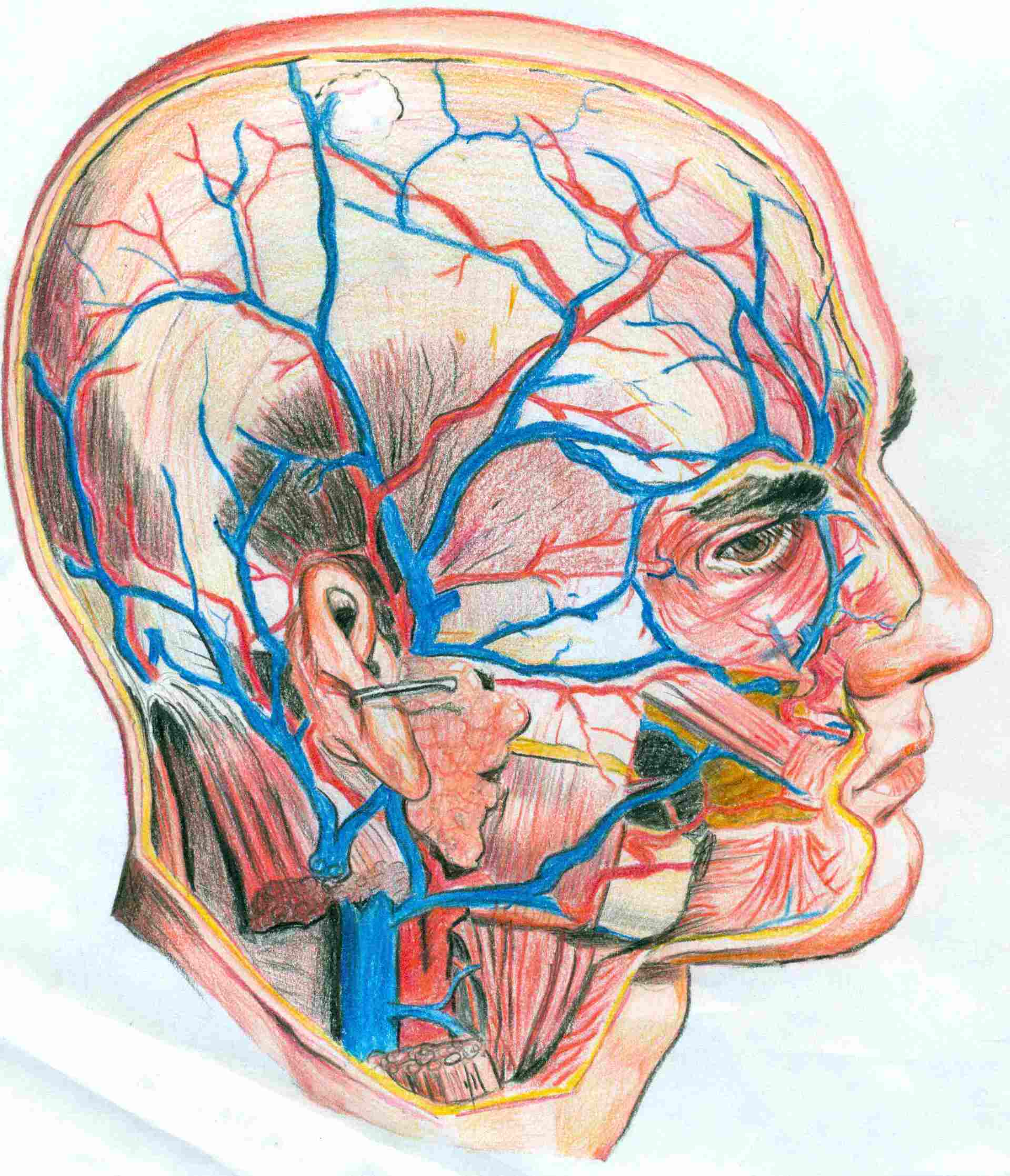 【第一弹】人体解剖绘图比赛