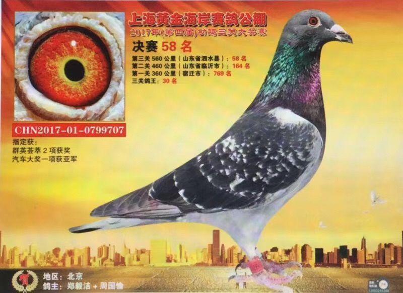 鸟类鸽仓鼠教学喜欢鸟动物800_582鸽子到冬天了图示吃什么图片