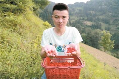 90后小伙直播乡村挖红薯捉泥鳅 视频播放量超2亿