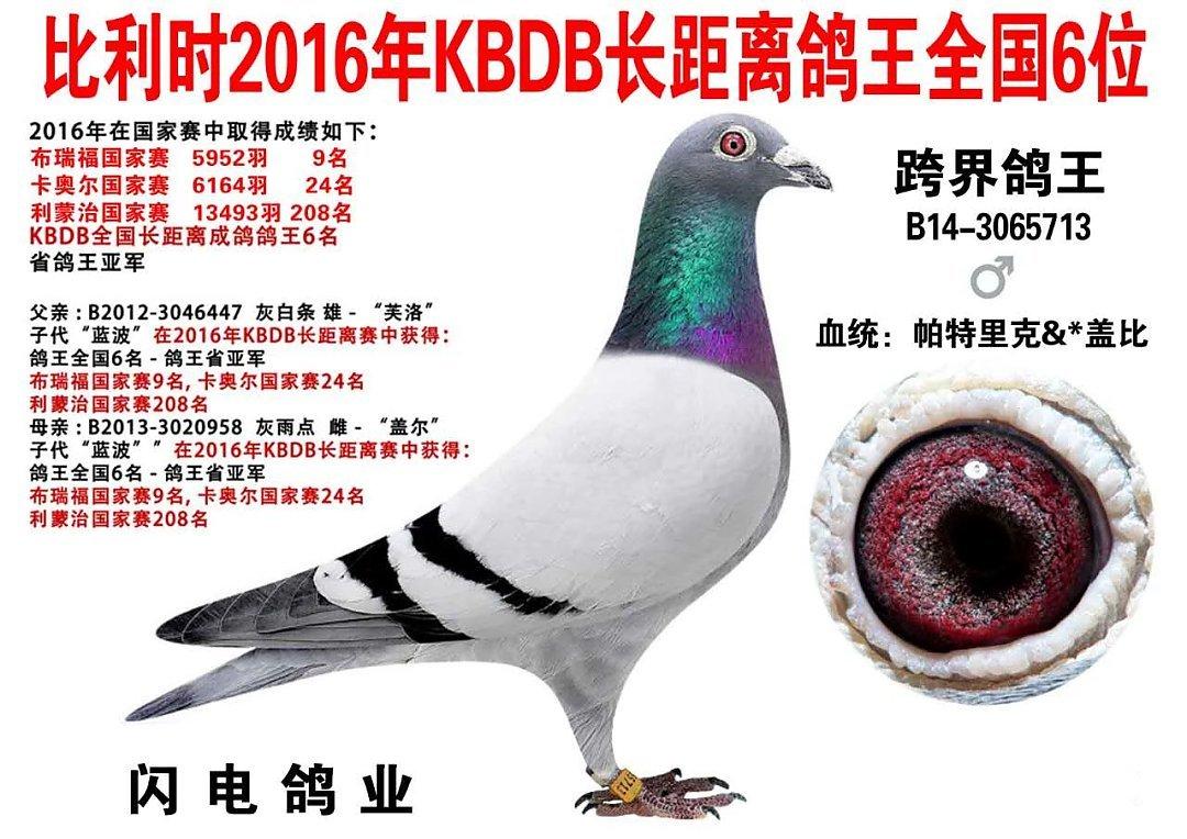 上海黄金海岸公棚决赛第一批归巢鸽欣赏(图)-中信网信鸽园地