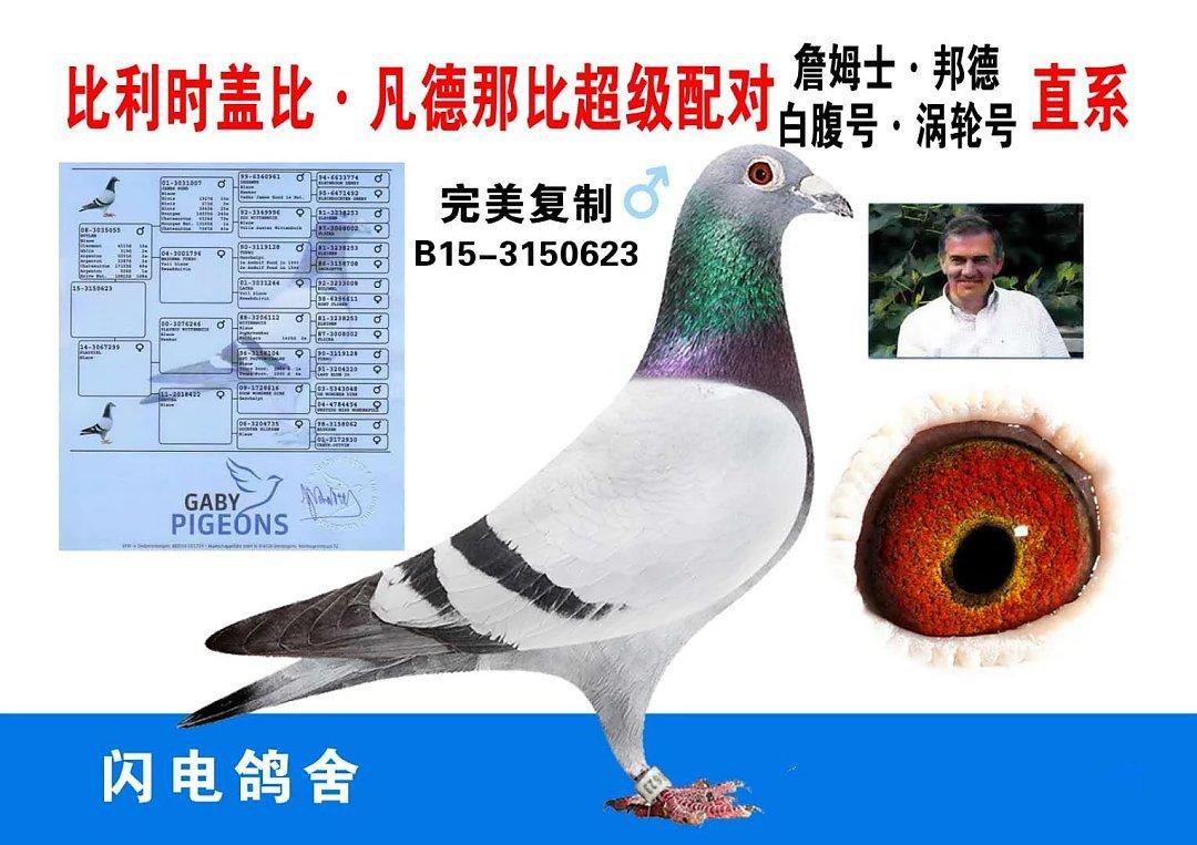 彻底打破魔咒:上海黄金海岸公棚决赛500公里归巢... _赛鸽资讯网