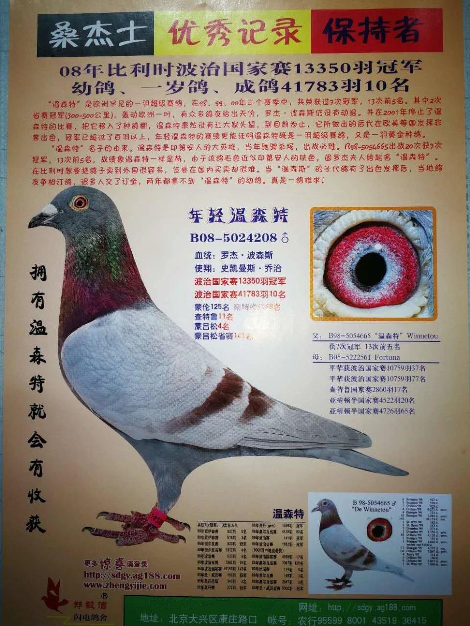 厉兵秣马 休整再战!浙江黄金海岸公棚专访-中国信鸽信息网