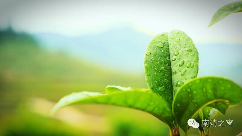 【征集】南靖茶产业征集logo,广告语,万元奖金等你拿图片
