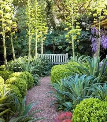 花园庭院设计中植物美感的表现