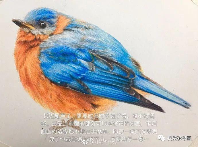 彩铅手绘--关于一只小胖鸟传说!