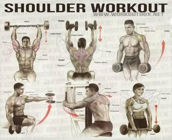 【每日健身】最全的健身动作训练图解,快来看!
