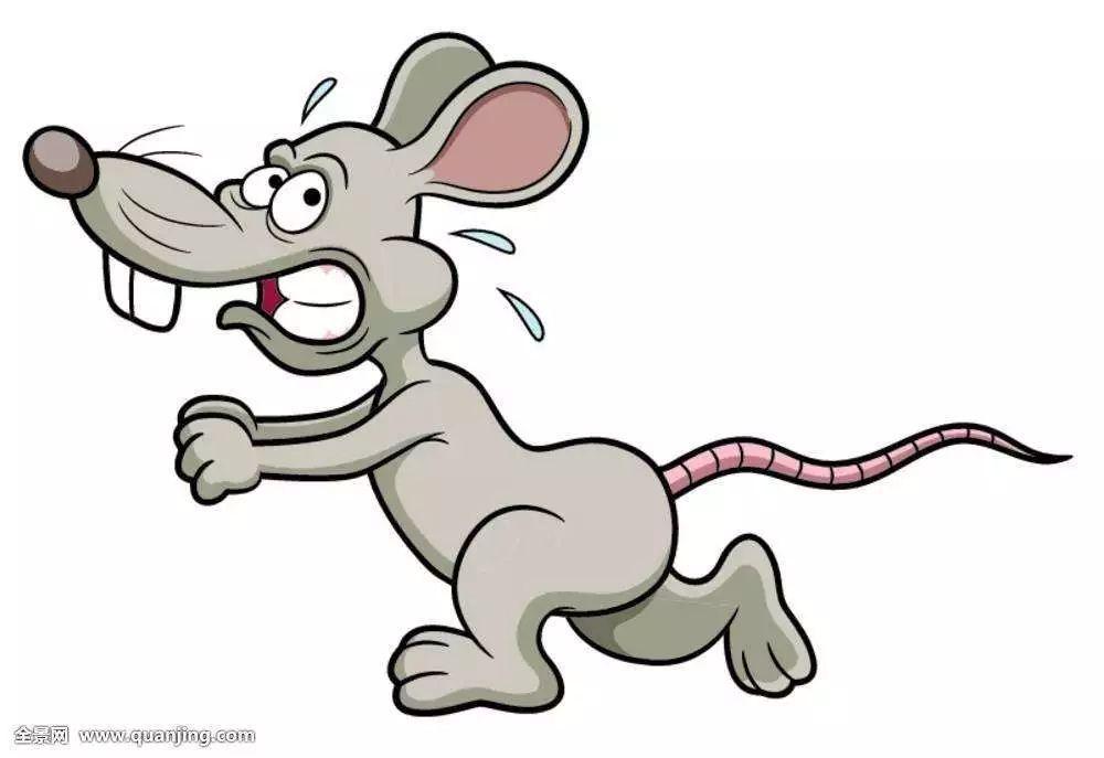 猫追老鼠卡通图片