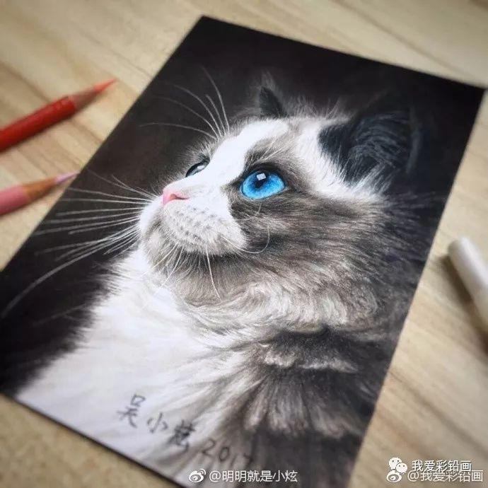 彩铅手绘|一只高冷的【布偶猫】