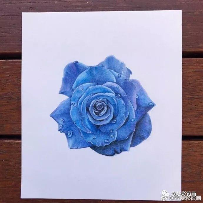 彩铅手绘—蓝色妖姬