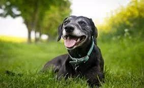 我家狗狗信佛了?天天吃草是什么鬼