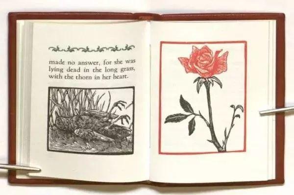 夜莺与玫瑰英文朗�_夜莺与玫瑰