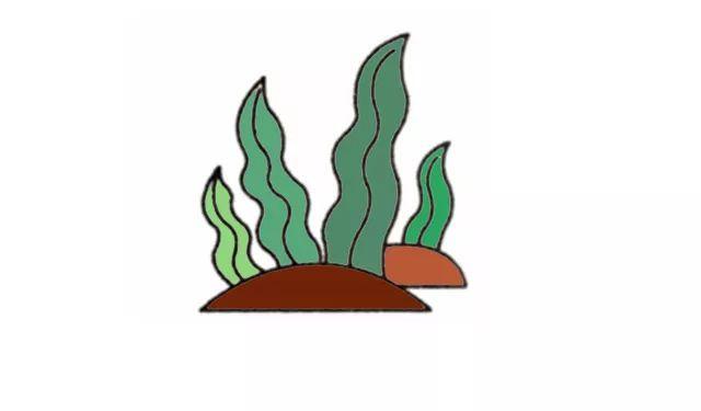 水草图片简笔画