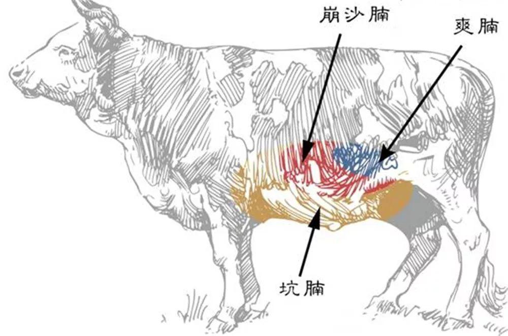 牛部位分解图 手绘